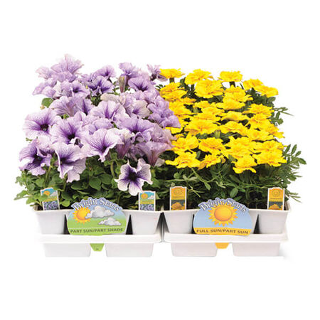 Bert Hybels Jumbo 6 Pack Assorted Flowers