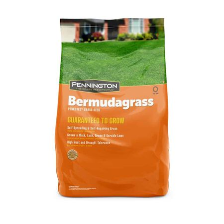 Penn ington Bermuda Grass 1 lb