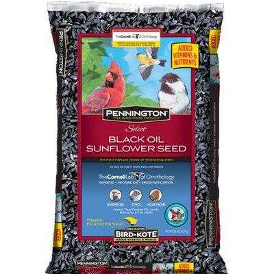 Ace Assorted Species Wild Bird Food Black Oil Sunflower Seed 20 lb.