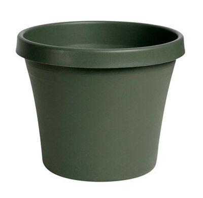 Bloem Terrapot Thyme Green Resin Traditional Planter 10.7 in. H x 12 in. W