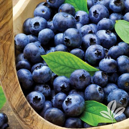 Blueberry Plant Assorted 1 Gallon