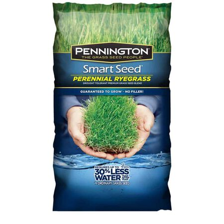 Smart Perennial Ryegrass 3 lb