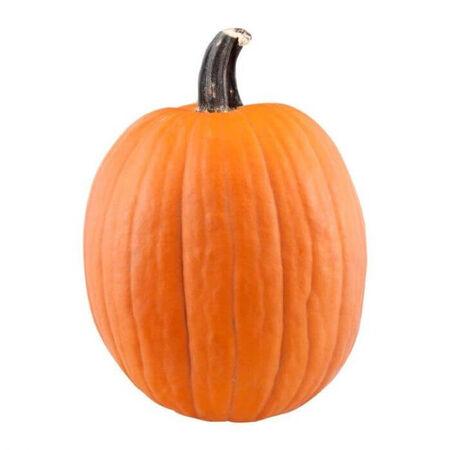 XL Pumpkin