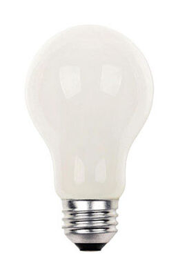 Westinghouse Halogen Light Bulb 42 watts 760 lumens 3000 K A-Line A19 Medium Base (E26) 12 pk