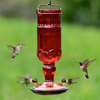 Perky-Pet Hummingbird Glass 24 oz. Bottle Nectar Feeder 4