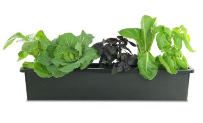 Pennington Window Box Liner Plastic Black 5inx30inx5.5in 14ea