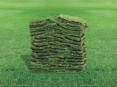 "St. Augustine Grass Sod 16"" x 24"""