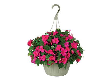 "10"" Annual Hanging Basket - Assorted"